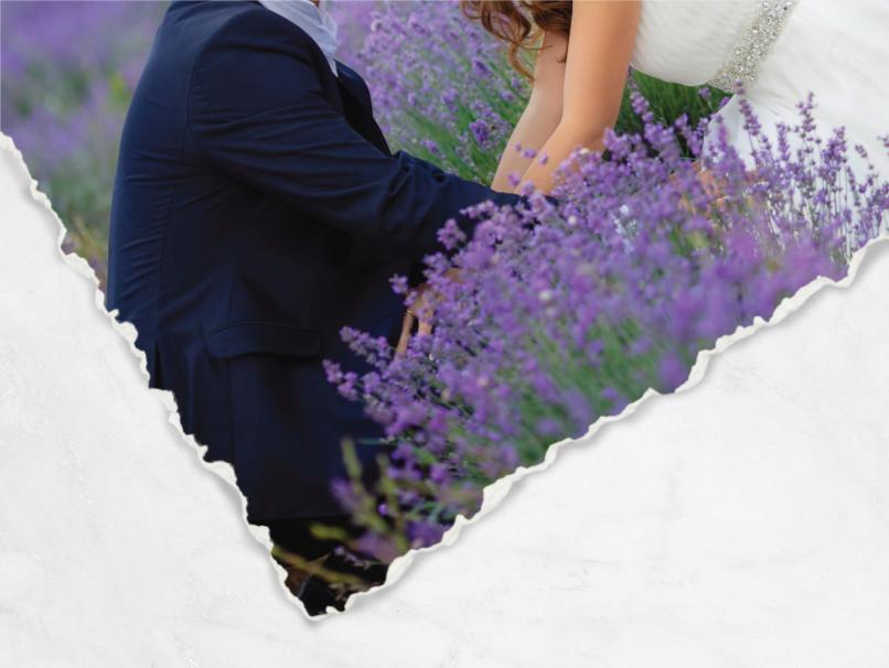 Bride & Groom in Lavender Field