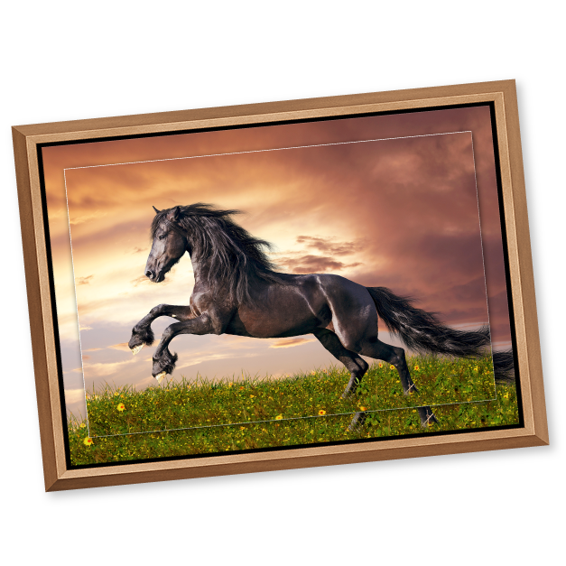 Black Stallion in a meadow at sunset printed on metal print & framed